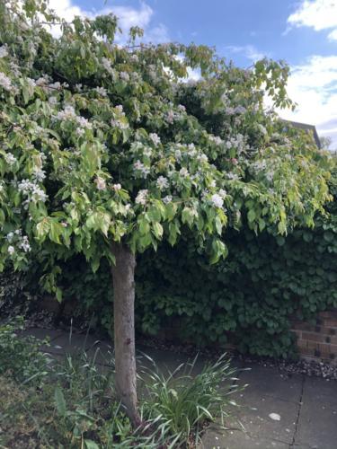 PF Garden Tree